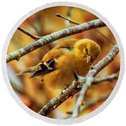 The Inquisitive Goldfinch Round Beach Towel by John Harding