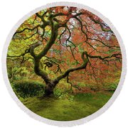 The Japanese Maple Tree In Spring Round Beach Towel