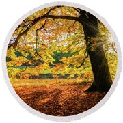 The Last Rays Of Golden Autumn Round Beach Towel
