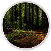 Round Beach Towel featuring the photograph The Light In The Forest No. 2 by TL Mair