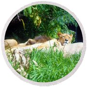 The Lion Awakes Round Beach Towel