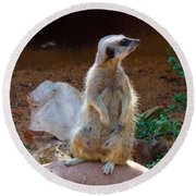 The Lookout - Meerkat Round Beach Towel