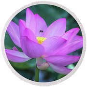 Round Beach Towel featuring the photograph The Lotus And The Bee by Cindy Lark Hartman