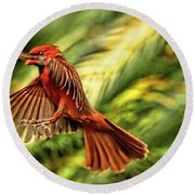 The Male Cardinal Approaches Round Beach Towel