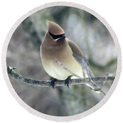 The Masked Cedar Waxwing Round Beach Towel