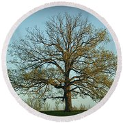 The Mighty Oak In Spring Round Beach Towel