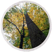 The Mighty Tulip Popular State Tree Of Indiana Round Beach Towel