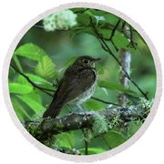 ..the Mysterious Thrush.. Round Beach Towel