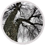 The Old Tree Round Beach Towel