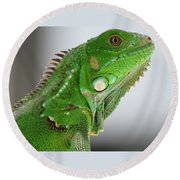The Omnivorous Lizard Round Beach Towel