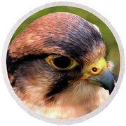 The Peregrine Round Beach Towel by Stephen Melia