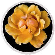 The Perfect Rose Round Beach Towel by Venetia Featherstone-Witty