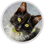 The Portrait Of A Cat Round Beach Towel