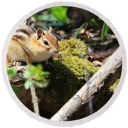 Round Beach Towel featuring the photograph The Poser by Rick Morgan