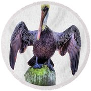 The Posing Pelican Round Beach Towel by JC Findley