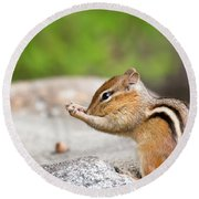 The Praying Chipmunk Round Beach Towel