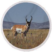 The Pronghorn Digital Art Round Beach Towel