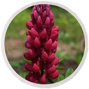 Round Beach Towel featuring the photograph The Rare Red Lupine by Brenda Jacobs