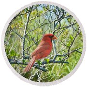 The Red Cardinal Round Beach Towel
