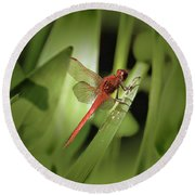 The Red Dragonfly Nbr.1 Round Beach Towel