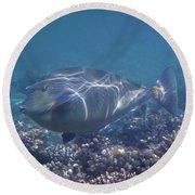 The Red Sea Bluespine Unicornfish Closeup Round Beach Towel