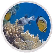 The Red Sea Underwater World Round Beach Towel