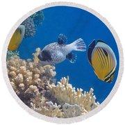 The Red Sea Underwater World Round Beach Towel