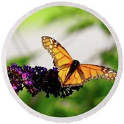 The Resting Monarch Round Beach Towel