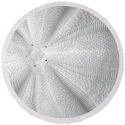 Round Beach Towel featuring the photograph The Sea Biscuit by JC Findley