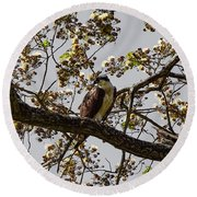 The Sea Eagle Round Beach Towel