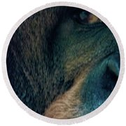 The Shy Orangutan Round Beach Towel