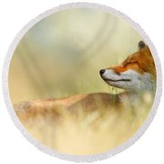 The Sleeping Beauty - Wild Red Fox Round Beach Towel by Roeselien Raimond