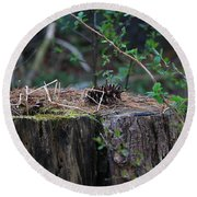 Round Beach Towel featuring the photograph The Stump by Rick Morgan