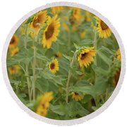 The Sunflower Patch Round Beach Towel