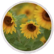 The Sunflowers In The Field Round Beach Towel