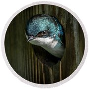 The Tree Swallow Round Beach Towel
