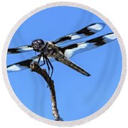 The Twelve-spotted Skimmer Round Beach Towel