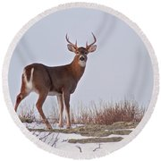 The Watchful Deer Round Beach Towel