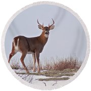 The Watchful Deer Round Beach Towel by Nancy De Flon