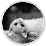 The White Kitten Round Beach Towel