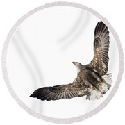 The Wings Of An Eagle 2018 Isolated Round Beach Towel