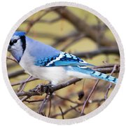 The Winter Blue Jay  Round Beach Towel