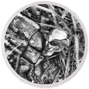Round Beach Towel featuring the photograph The Wise Old Turtle Black And White by JC Findley