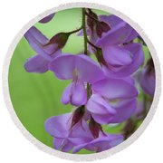 Round Beach Towel featuring the photograph The Wisteria by Mark Dodd