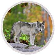 The Wolf. Round Beach Towel