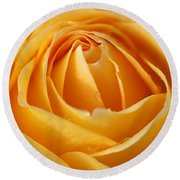The Yellow Rose Round Beach Towel