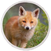The Young And Eager Red Fox Kit Round Beach Towel
