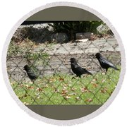 Thirsty Trio Of Ravens Round Beach Towel by Belinda Lee