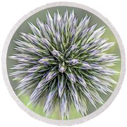Thistle II Round Beach Towel