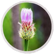Thistle In The Canyon Round Beach Towel